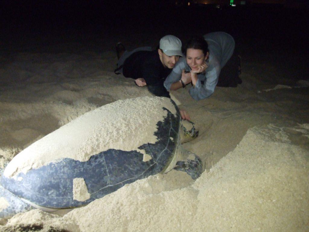 Atrakcje Omanu rezerwat żółwi
