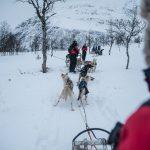 Norwegia zimą to nie tylko zorza polarna. Psie zaprzęgi w Tromso