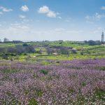 Cypr zimą. Czy warto wybrać się na Cypr poza sezonem?