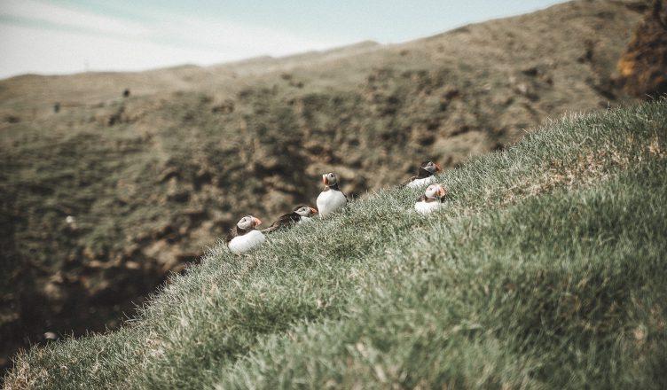 mykines wyspy owcze